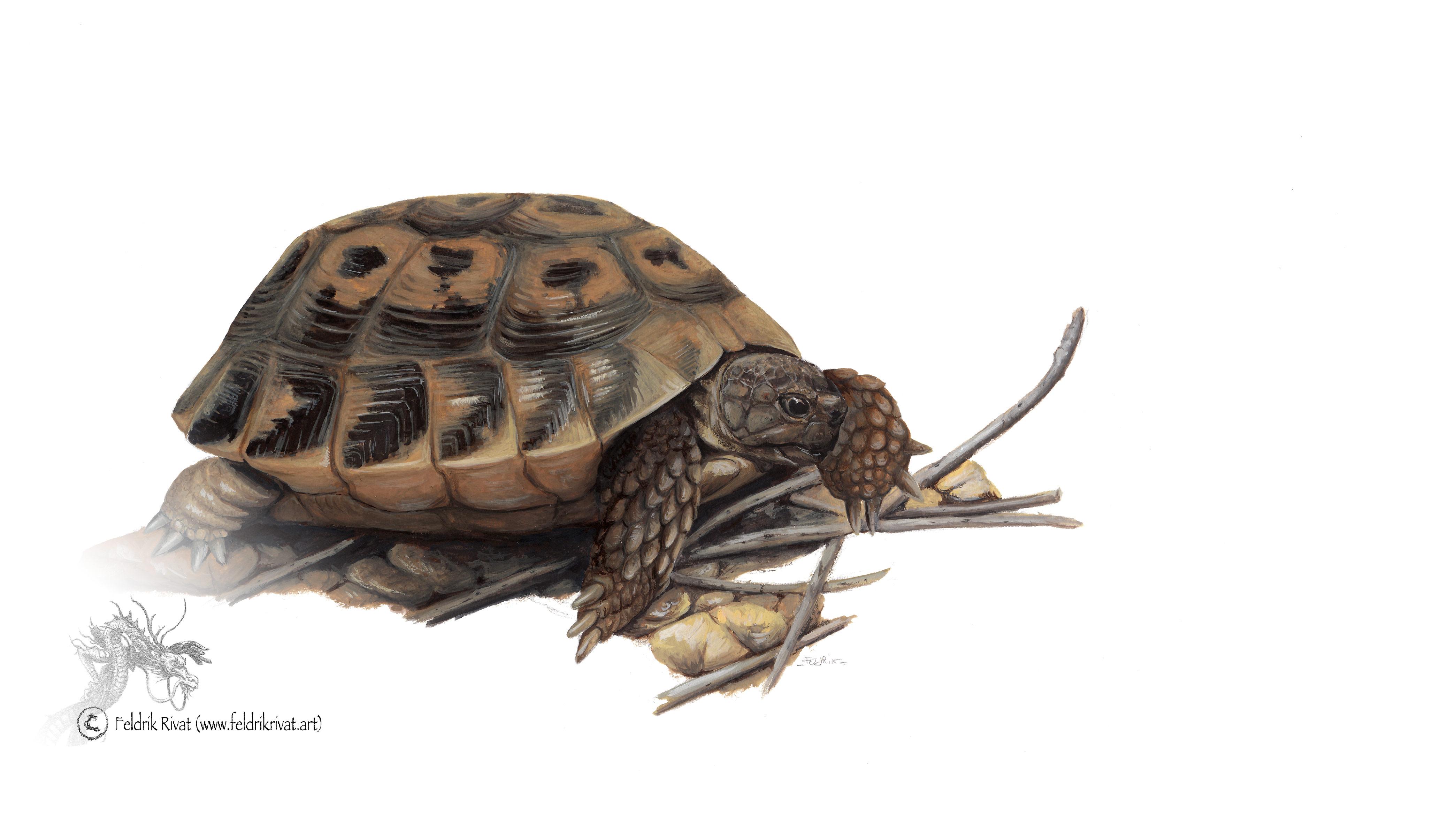 Reptiles, batraciens et chiroptères